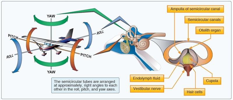 Motion Flight Sim Theory - Semicircular Canals